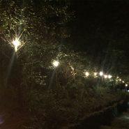 50m BC Festoon Lighting, 1m Spacing