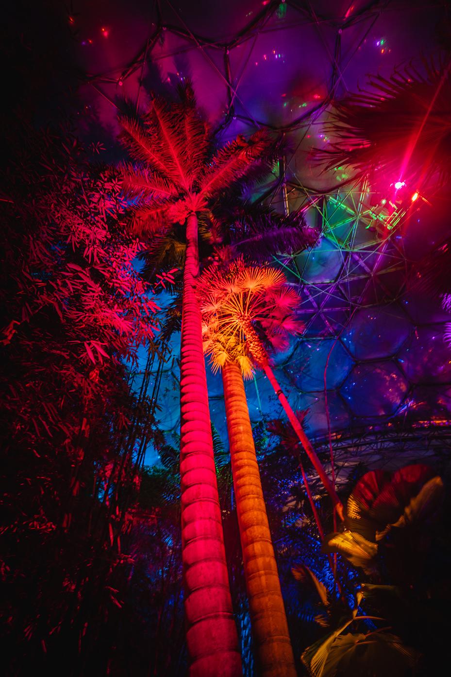 LEDJ Light up Eden for Christmas